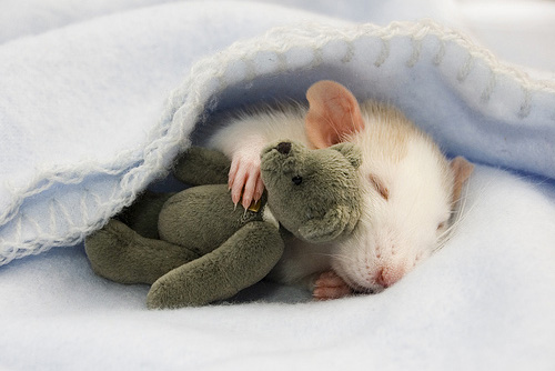 rat-sleeping2 - Lasting friendships start early - Inspiration & Hope